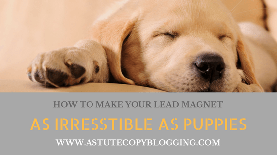 build email list, killer lead magnet ideas, lead magnet templates, lead magnet creator, lead magnet design, lead magnet checklist, lead magnet pdf, lead magnet tripwire, free lead magnet templates, fitness lead magnets, killer lead magnet, offer, How to make your lead magnet as irresistible as puppies, lead magnet, irresistible, puppies